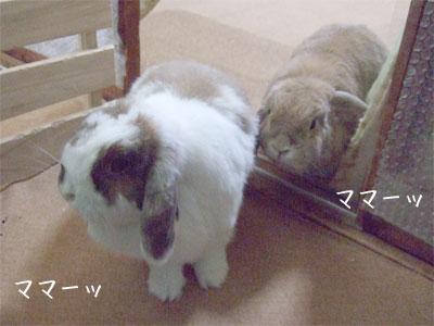 20090927_3.jpg