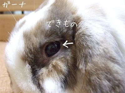 20091016_1.jpg