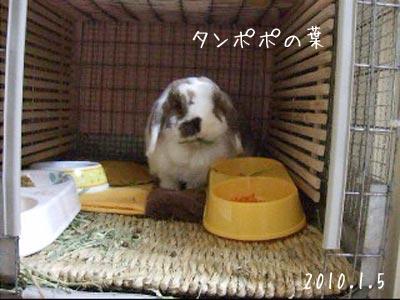 20100109_1.jpg