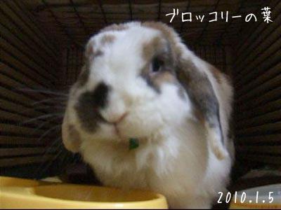 20100109_2.jpg