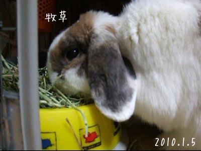 20100109_4.jpg