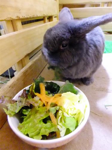 お誕生日のサラダ