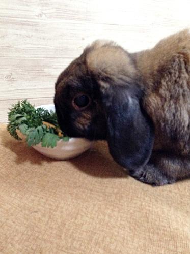 お野菜大好きルル