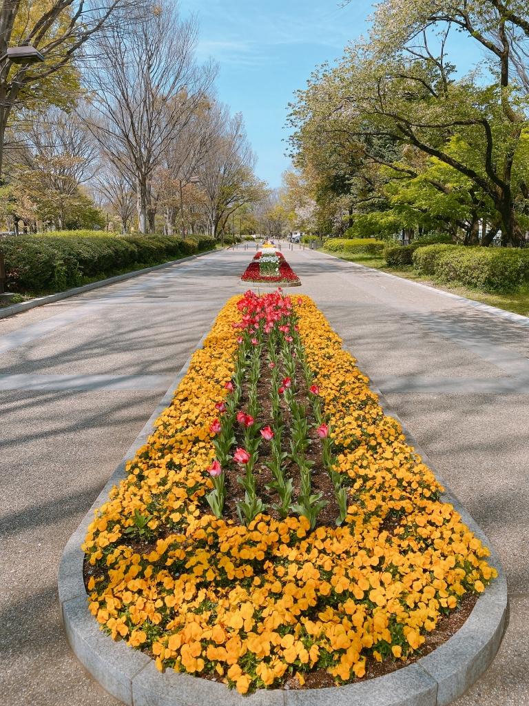 小金井公園2