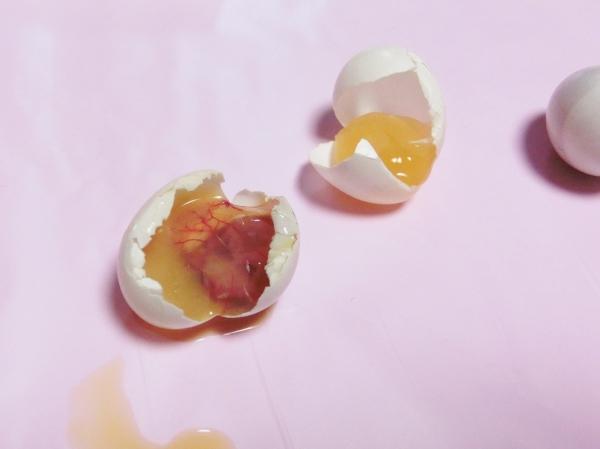 文鳥 卵 中止卵