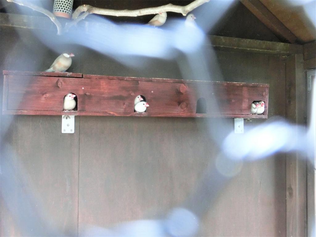 手作り文鳥アパート