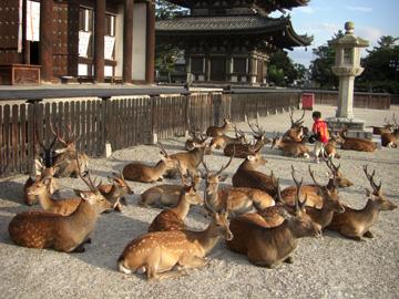 奈良公園 興福寺 08年8月