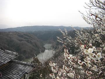 月ヶ瀬梅渓 2009年