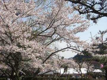 柳生さくら祭 2009年