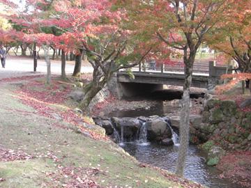 奈良公園 11月 紅葉