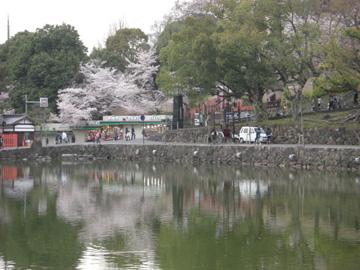 奈良公園2011年4月25日