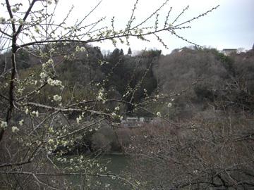 月ヶ瀬梅渓