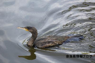 世界遺産 奈良公園 東大寺 鏡池