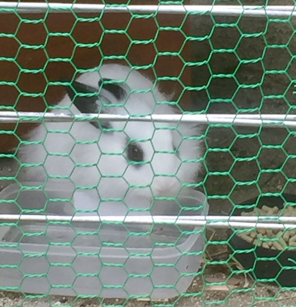 巨峰4ウサギ