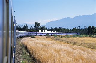 BlueTrainSA_train_320C.jpg