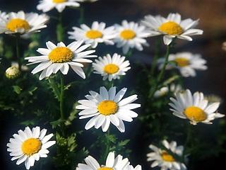 Flower1-010縮小.jpg