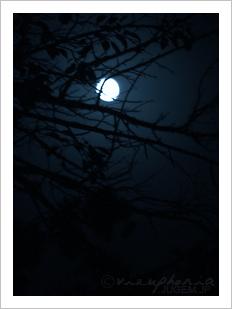 夜の子供! - 2005 Aug.