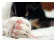 猫の仮眠 - 2005 Aug.