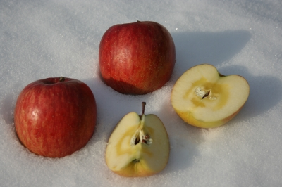 fuji wago apple pictures 121214 035.JPG
