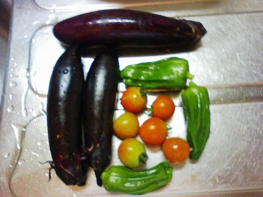 初収穫の茄子、ピーマン、トマト