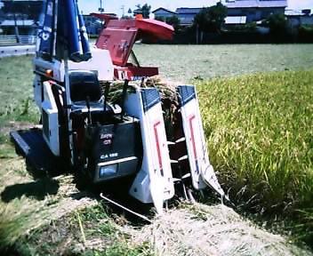 超早期米の刈り入れ