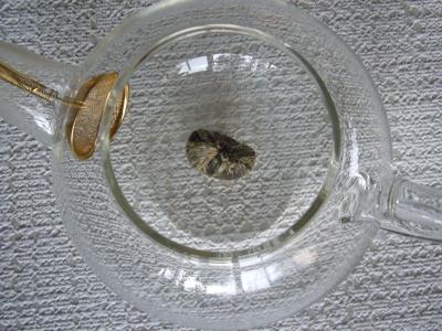 中国茶 金元宝1