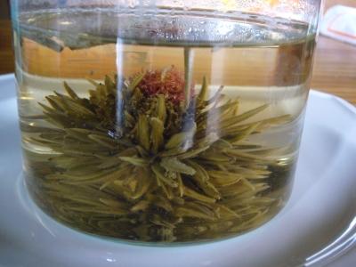 ジャスミン茶 出水芙蓉2