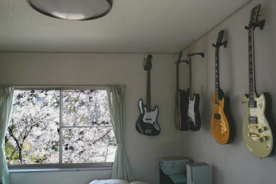 桜とギター