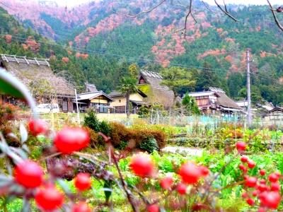 かやぶき屋根 集落 紅葉 美山