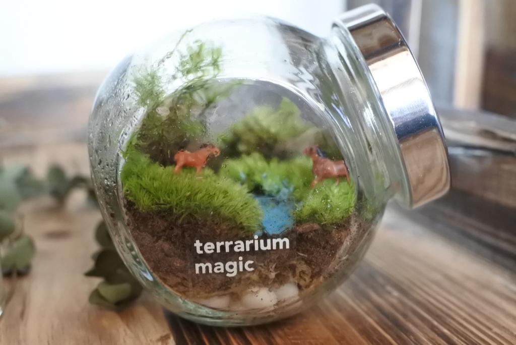 夏休み 体験イベント  苔テラリウムを作ろう