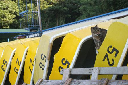 ボートと猫