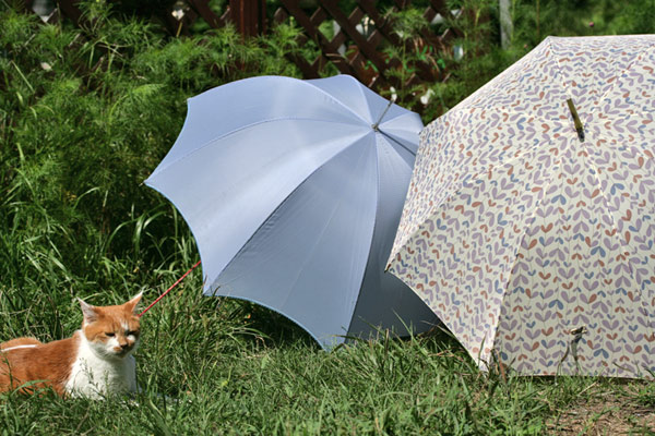 日傘で散歩2