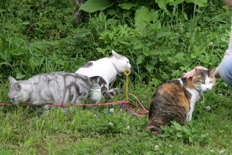 猫取材風景1