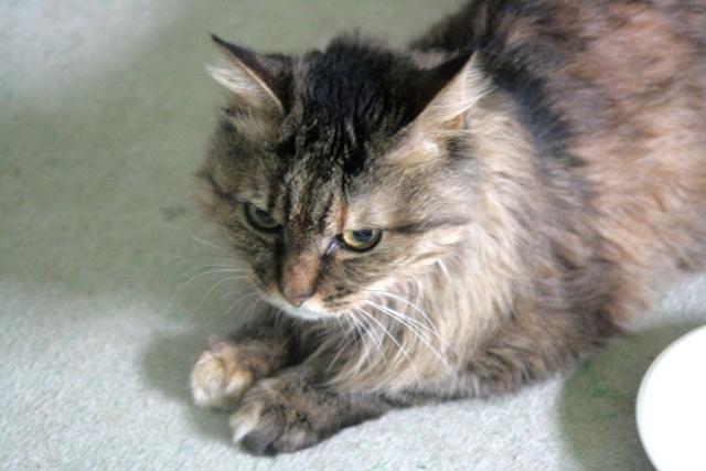 八ヶ岳の猫ジーグ