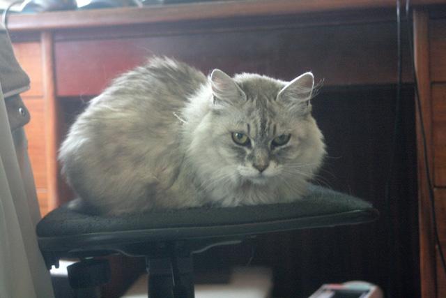 八ヶ岳の猫ブーレ