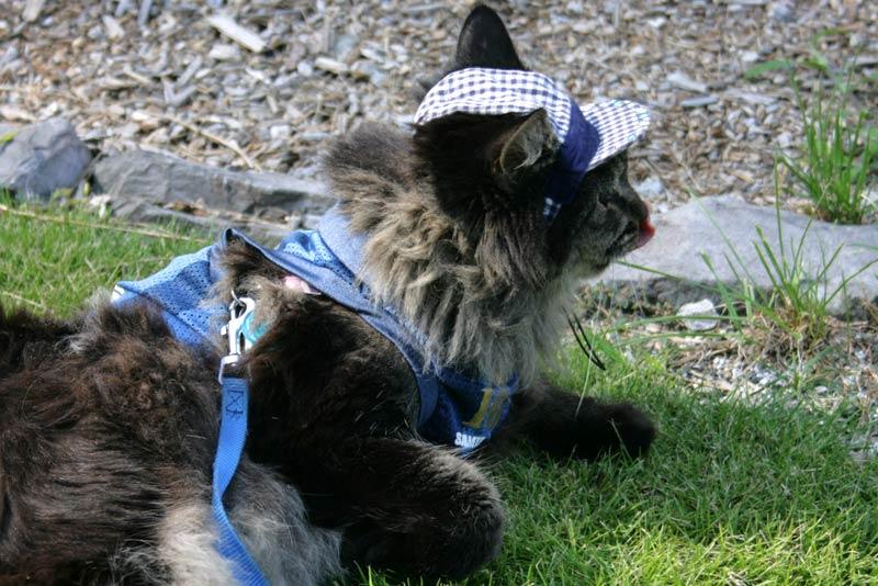 八ヶ岳旅行の親善大使&広報部長の猫MAYたん