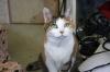 猫:フーガ