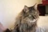 猫:ジーグ