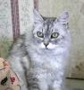猫:ブーレ