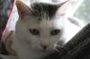 猫:サラバンド