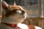思いに耽る愛猫カノン