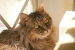 奇跡猫ジーグ