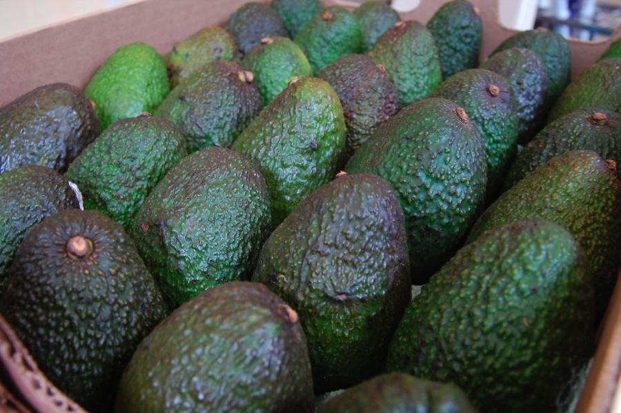 avocado02.jpg