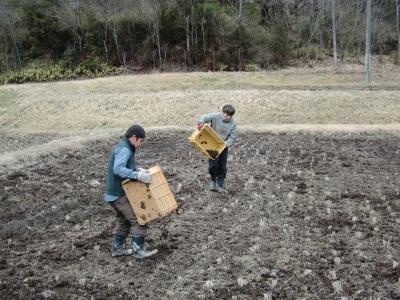 ワラ堆肥投入中