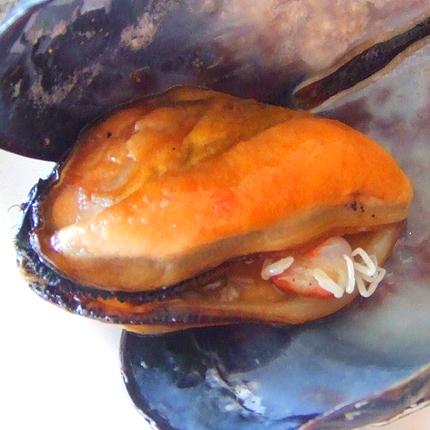 ムール貝に蟹が…
