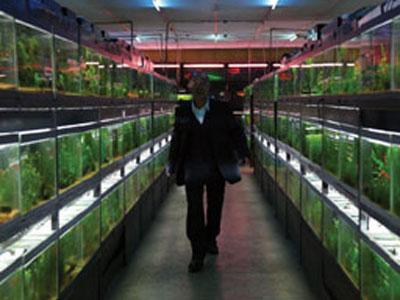 熱帯魚映画
