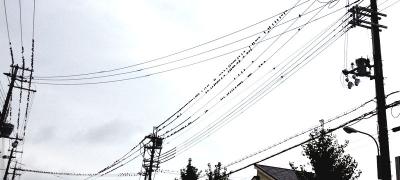 夕暮れ時の曇り空、電線にとまるムクドリの群れ その1