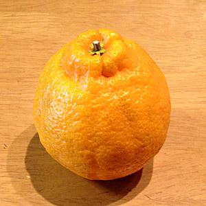 しらぬい(不知火)という名の美味なる柑橘!