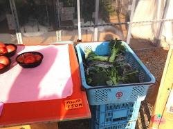 明石: 藤井農園〜時季によっていろいろ季節の獲れたて野菜も販売してますよ!