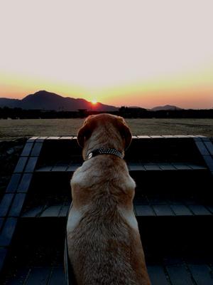 愛犬GORO、落日への感慨